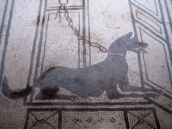perro pompeyano